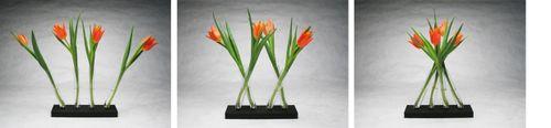 eco-chic vase, eco-modern vase, green home decor, green home design, green vase design, Lichen Adaptation, modern eco-vase